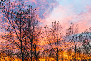 Silhouettes of autumnal vegetation in front of a very colorful sunset