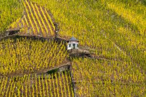 Vineyard house in the autumnal vineyards of Bernkastel-Kues, Germany