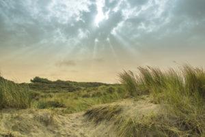 Dune landscape at the North Sea, Netherlands