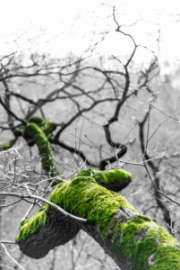 A moss-covered branch