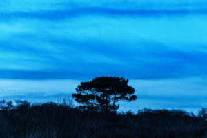 Nocturnal dune landscape on the North Sea beach near Renesse, The Netherlands