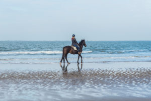 A rider on horseback on the North Sea beach near Renesse, The Netherlands.