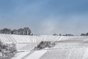 Snow-covered vineyards on the Moselle