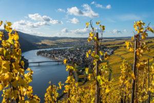 Die Mosel mit herbstlich gefärbten Weinbergen bei Mehring in der Nähe von Trier.