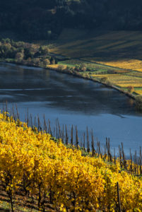 The Moselle with autumn-colored vineyards near Mehring near Trier.