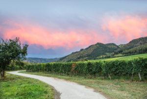 Sommerliche Mosellandschaft bei Riol in der Nähe von Trier.