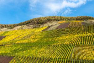 Buntes Weinlaub im Weinberg vor einem teilbewölkten, herbstlichem Himmel.