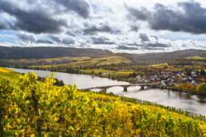 The Moselle with its autumn colored vineyards near Longuich near Trier.