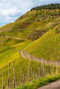 Wirtschaftswege in den herbstlichen Weinbergen von Schweich an der Mosel.