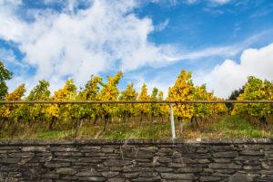 Mauer mit buntem Weinlaub vor einem teilbewölkten, herbstlichem Himmel.