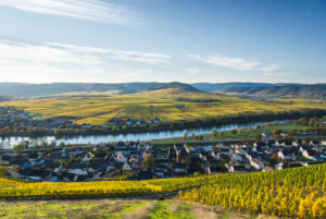 Vineyards in autumn colors near Klüsserath with a view of the Moselle
