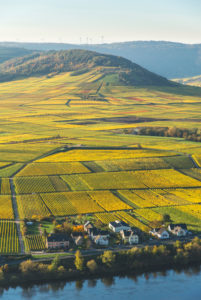 Weinberge in Herbstfarben bei Klüsserath mit Blick auf die Mosel