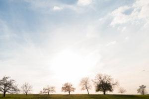 Deutschland, Baden-Württemberg, Schwäbische Alb, Albvorland, Streuobstwiese im Frühling bei Gegenlicht