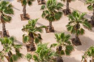 Naher Osten, Israel, Mittelmeer, Netanja, Blick von oben in Stadtpark mit symmetrisch angeordneten Palmen