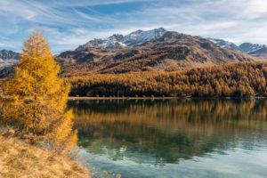 Switzerland, Graubünden, Engadin, Upper Engadine, Sils, Lake Sils, autumn colors, view from the Chaste peninsula to Piz Corvatsch and the Fex valley