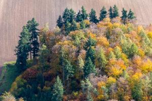 Deutschland, Baden-Württemberg, Bodenseeregion, Nadelbäume und bunte Laubbäume im Herbst von oben