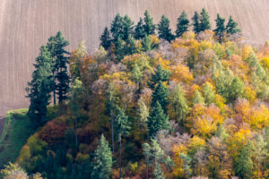 Germany, Baden-Wuerttemberg, Lake Constance region, conifers and colorful deciduous trees in autumn from above