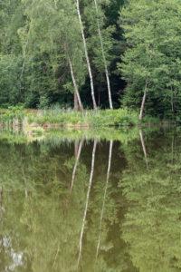 Deutschland, Baden-Württemberg, Oberschwaben, Pfrunger Ried, Birken spiegeln sich im Moorsee