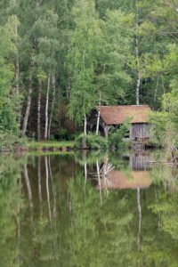 Germany, Baden-Württemberg, Upper Swabia, Pfrunger Ried, birches and hut are reflected in the moor lake