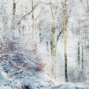 Winter in the Teutoburg Forest.
