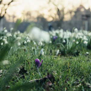 Nordpark in Bielefeld, early spring