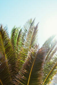 Palm branches in the summer sun on the island of Formentera,