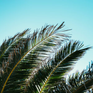 Palm branches in the summer sun on the island of Formentera