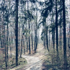 Teutoburg Forest in April, spring, sunshine