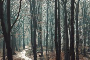 Februar im Teutoburger Wald, der Frühling ist schon leicht spüren