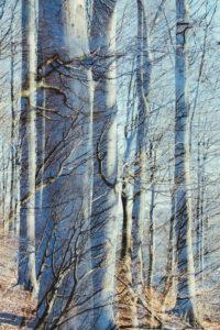 Teutoburg Forest in March, sunshine