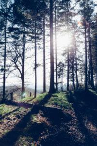 Ein Spaziergang im frühlingshaften Teutoburger Wald in Oerlinghausen,