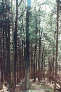 Frühlingssonne im Teutoburger Wald im April,
