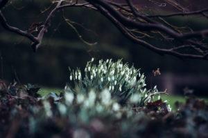 Botanic garden of Bielefeld in February, heralds of spring