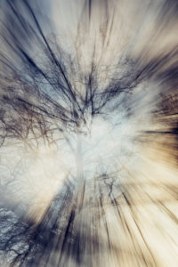 Double exposure of a leafless beech in winter