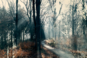 Winter in Teutoburg Forest