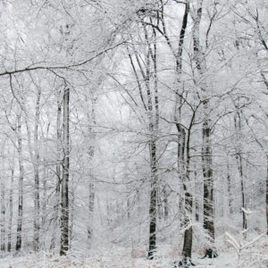 Snow-covered Teutoburg Forest in winter