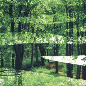 Frühling im Teutoburger Wald,