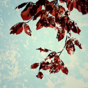 Springtime in Bielefeld, beech leaves, sunshine