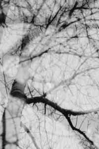 Alienation of a birch in autumn, moon in the tree trunk