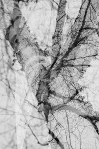 Alienation of a birch in autumn, close-up