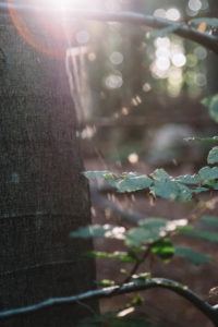 Forest vegetation in backlight, close-up