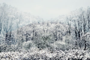 Snowy winter forest in the fog
