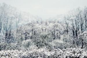 Verschneiter Winterwald im Nebel
