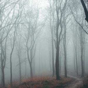 Kahle Bäume im Herbstwald