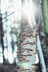 Morscher Baumstamm mit Pilzen bewachsen, close-up