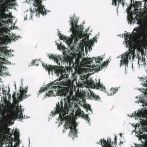 Winter forest, alienation, composing