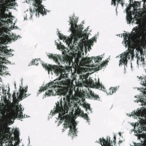 Winterwald, Verfremdung, Composing