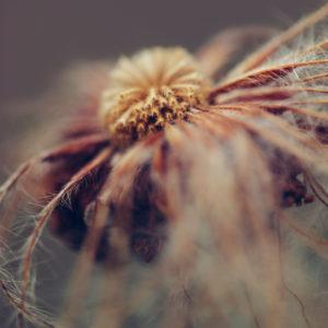 Blüte im Herbst, close-up