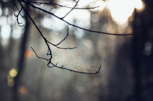 Bald branch with spider web in backlight, close-up