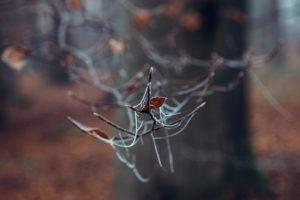 Ast mit Herbstlaub und Spinnennetz, close-up